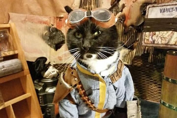 Kediler Fallout cosplay'i yaparsa!